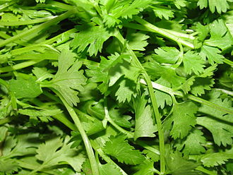 330px-A_scene_of_Coriander_leaves